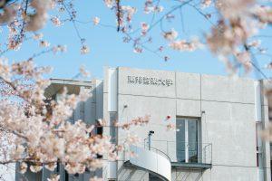 川越キャンパス桜